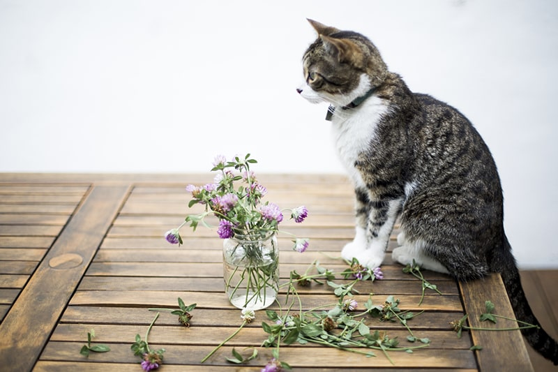 tabby cat with green collar and tag on a table surrounded by scattered flowers