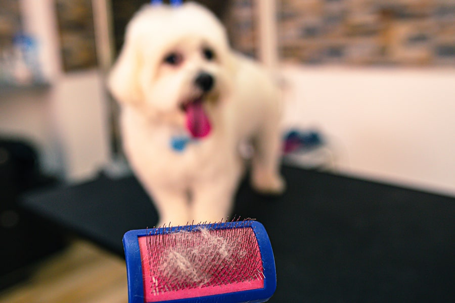 small white dog being groomed in a pet salon