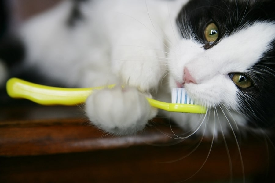 black and white kitten playing with a yellow toothbrush