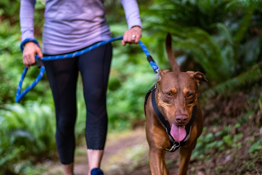happy dog being walked on a trail by a woman in a purple top