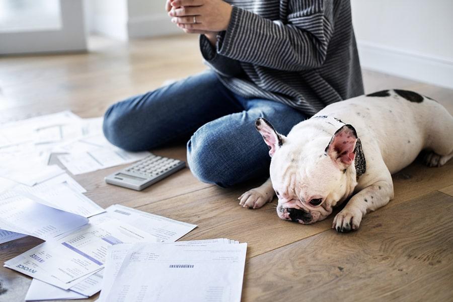 French bulldog helping to pay bills