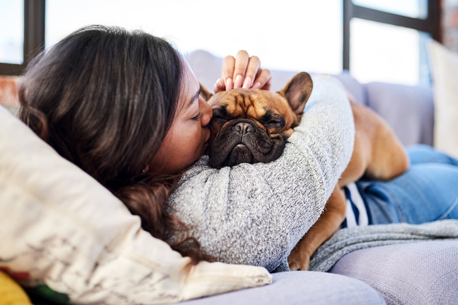 young woman snuggling with a French bulldog at home on a sofa