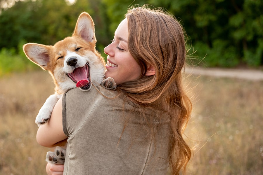 corgi dog yawning while being held by a brunette woman in a gray-brown t-shirt in a field