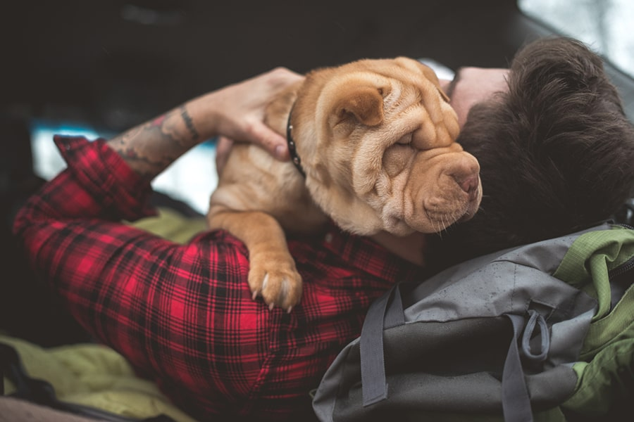 shar-pei dog snuggling with a man in a red and black plaid shirt