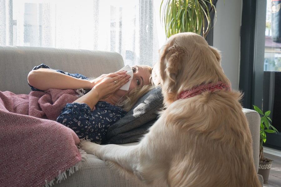 woman lying on couch while blowing her nose and looking at a golden retriever