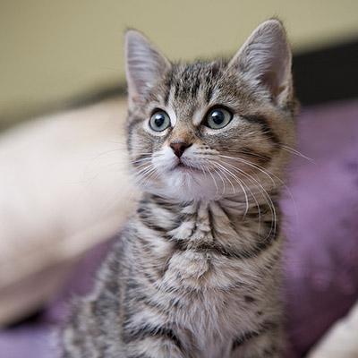 Compare Pet Insurance Plans | ASPCA® Pet Insurance