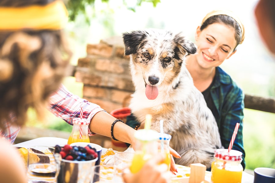 young people millennials with cute dog having fun together outdoors at garden party
