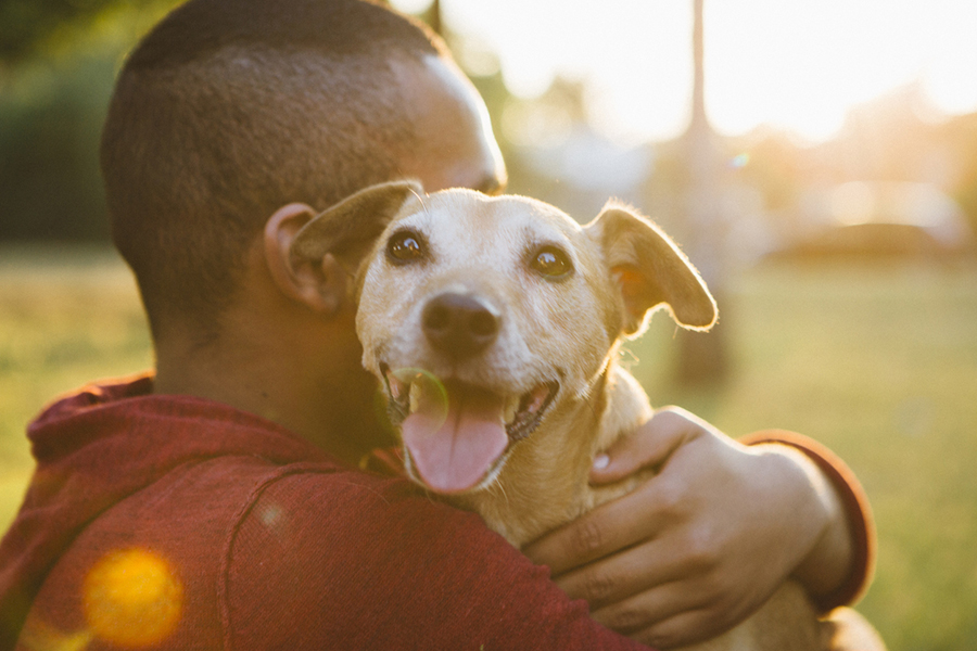 tan mixed breed dog being cuddled outside by a man
