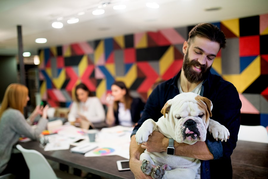 man with a beard holding an english bulldog in an office conference room