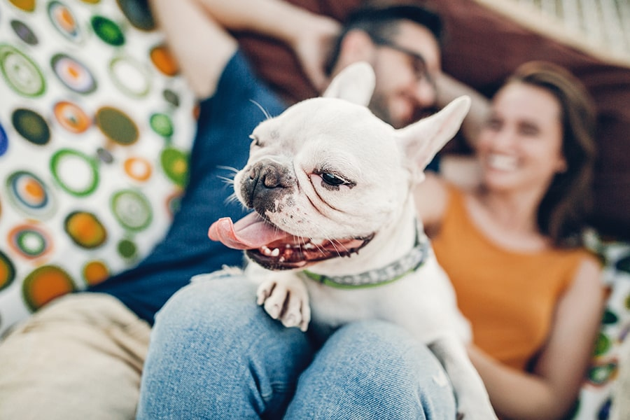 happy hipster couple with bulldog relaxing in hammock on the beach in sunset light