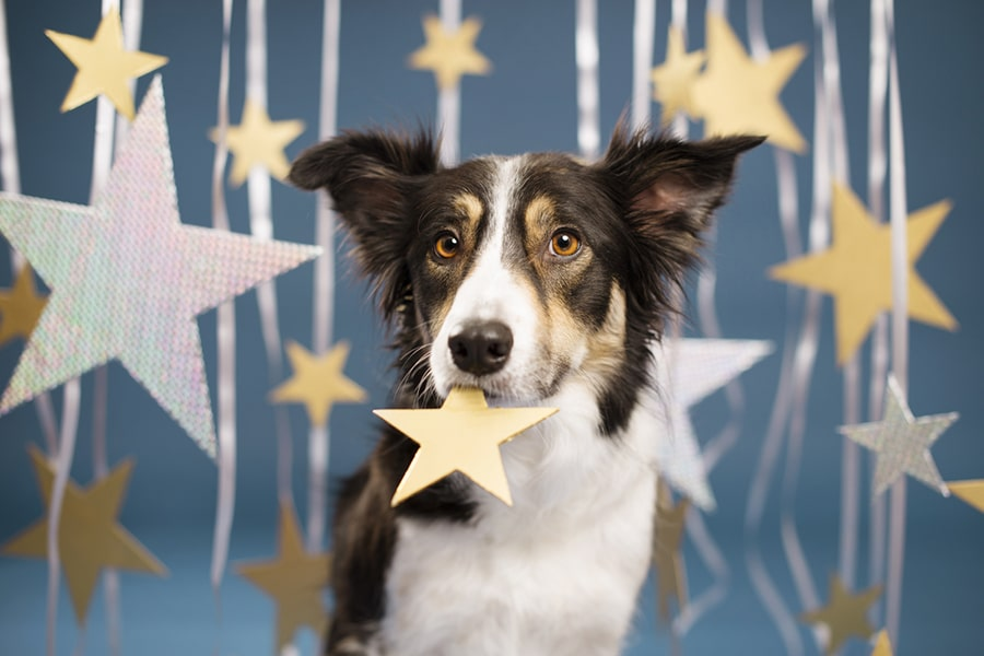 dog with golden eyes surrounded by cut-out stars