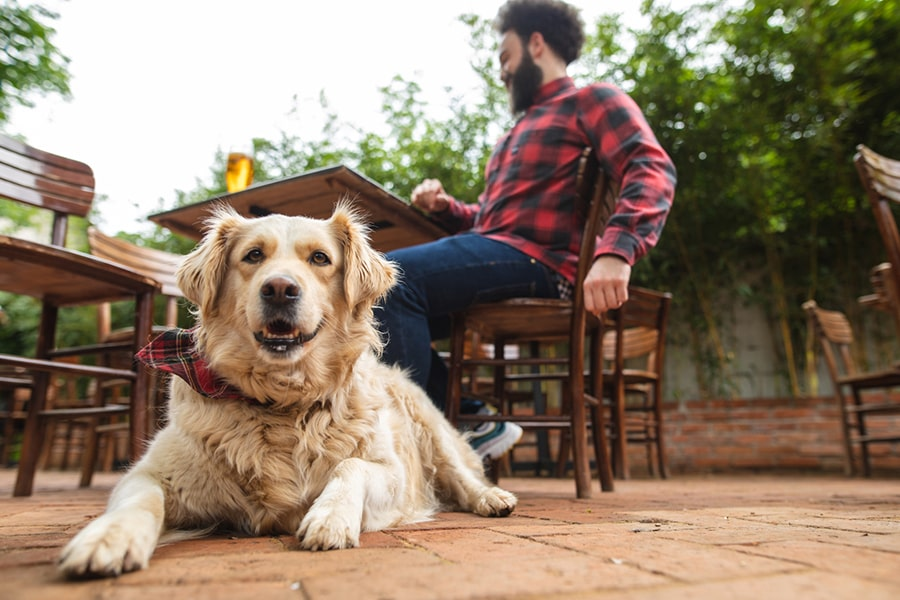 golden retriever mix dog wearing a plaid bandana on a patio at a restaurant with a man in a black and red plaid shirt