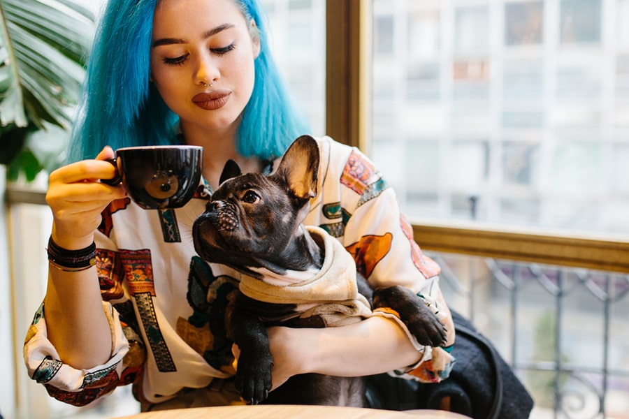woman with blue hair in a coffeeshop holding a black French bulldog in a tan sweater