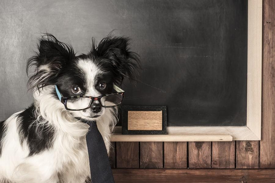 dog school teacher wearing glasses and black necktie in front of a blackboard