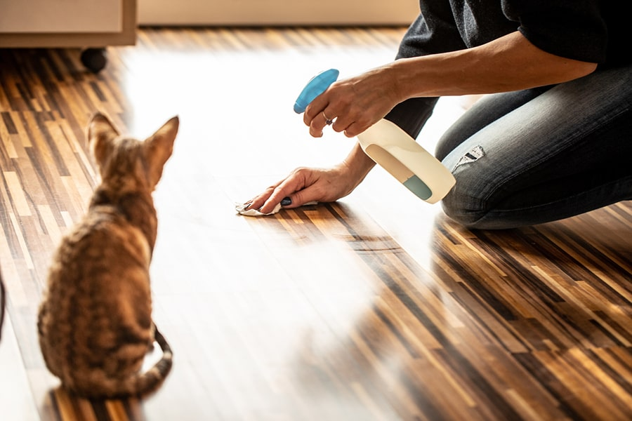 kitten watching pet owner clean wood floor