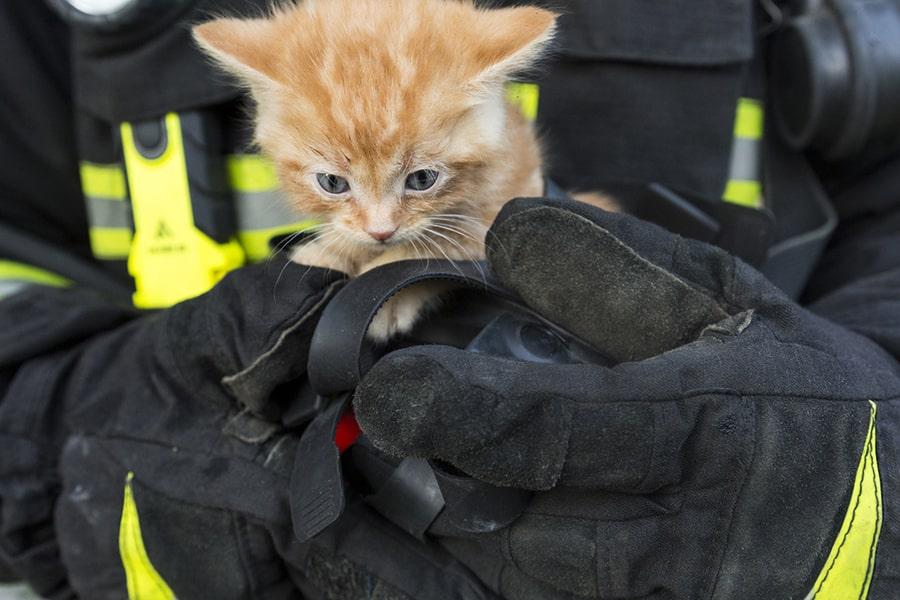 orange kitten being held by a firefighter