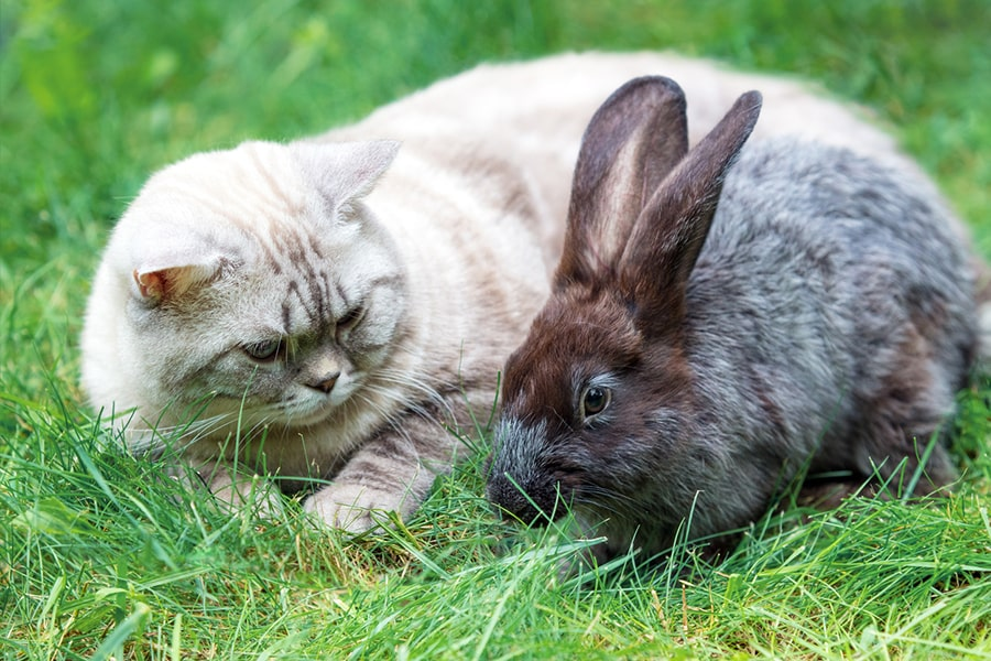 white cat and brown rabbit sitting next to each other outside on a green lawn