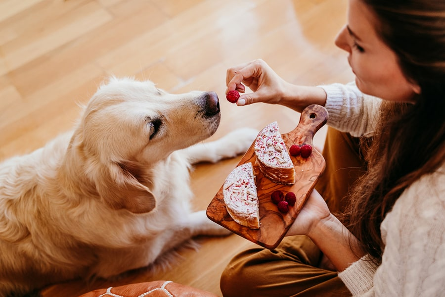 golden retriever dog being fed a raspberry from a woman in a white sweater and brown pants holding a cheese board
