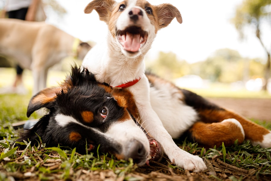 two young dogs playing at the park