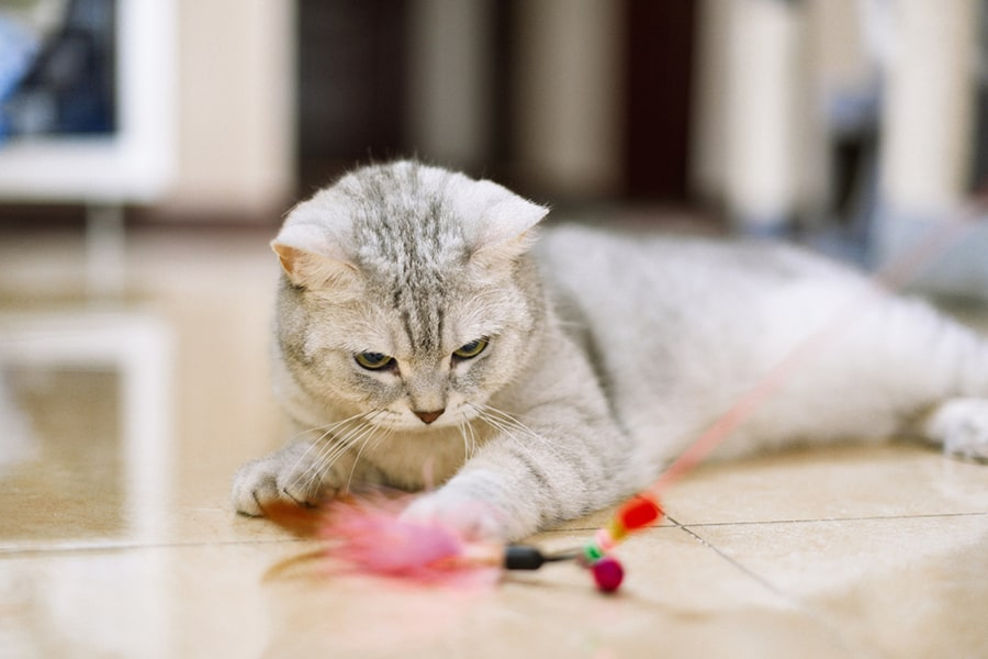 gray and white tabby cat playing with a pink feather toy
